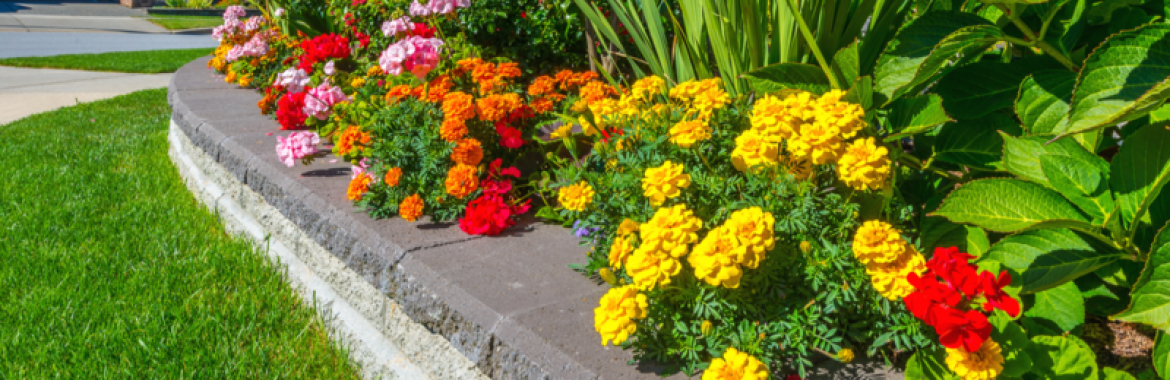 Affordable Ways to Boost a Property's Curb Appeal